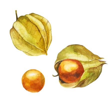 Ripe physalis fruit isolated on white background Stock Photo