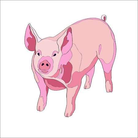 Vector illustration. Pig side view Color