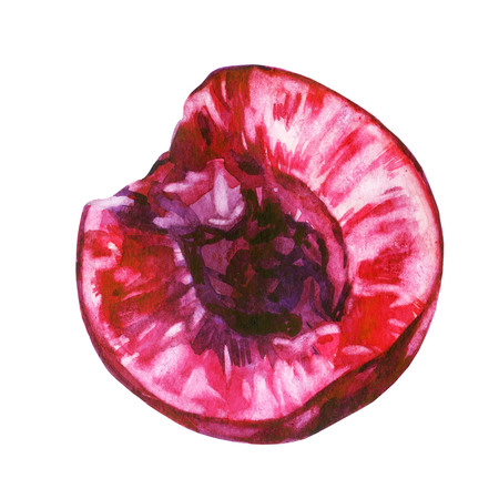 Watercolor illustration. Cherry berry sliced