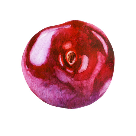 Watercolor illustration. Cherry berry. Stock Photo