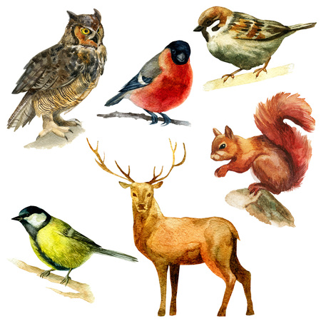 Watercolor illustration, set. Forest animals, sparrow, bullfinch bluebird owl squirrel deer