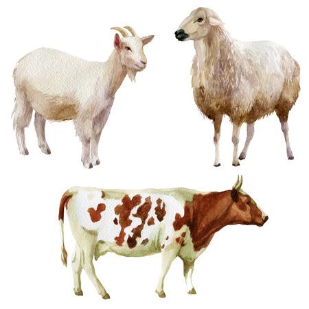 Watercolor illustration, set. Farm animals cow sheep goat Stock Photo