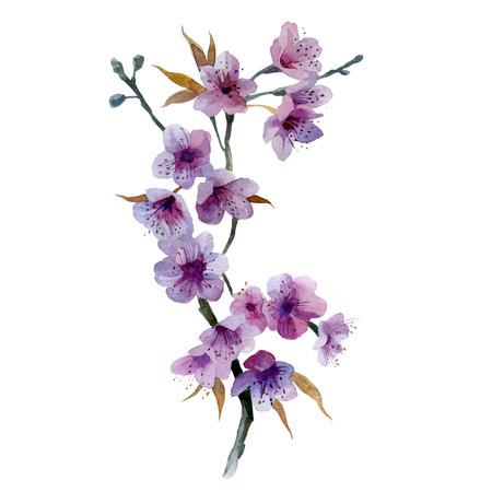 Watercolor illustration. Sakura flowers on a branch. Cherry blossom