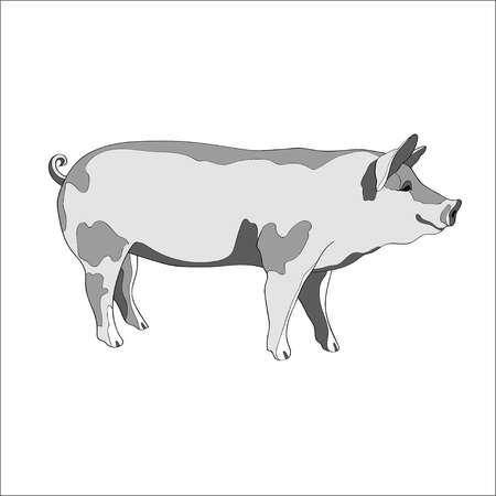 Vector illustration. Pig, side view Black and white