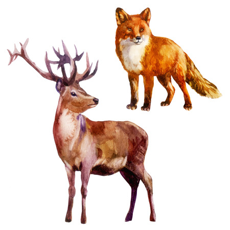 Watercolor illustration, set. Forest animal Deer and fox Stock Photo