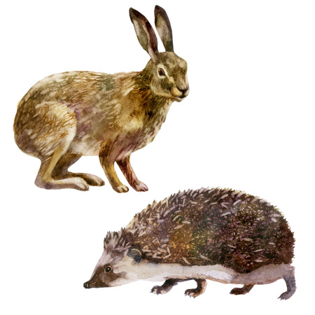 Watercolor illustration, set. Forest animal. The hare and the hedgehog Stock Photo