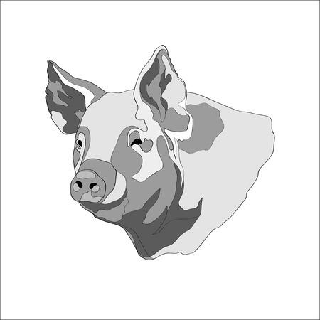 Vector illustration. Pig, pig head Black and white
