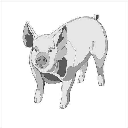 Vector illustration. Pig Black and white