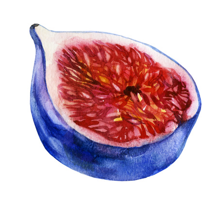 Watercolor illustration. Fig. Half of the figs.
