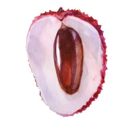 Watercolor illustration. Lychee. Half of the lychees, cut of part of the lychee. Stock Photo