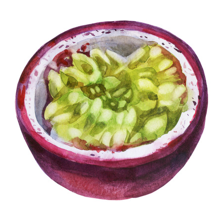 Watercolor illustration. Passion fruit. Fruit of passion fruit, half of passion fruit, cut off part of passion fruit.