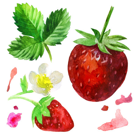 Watercolor illustration, set. Strawberry, strawberry on a twig with a flower.