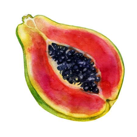 Watercolor illustration. Papaya. The fruit of the papaya half papaya, cut the papaya part.