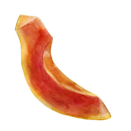 Watercolor illustration. Papaya. Cut off part of the papaya. Stock Photo