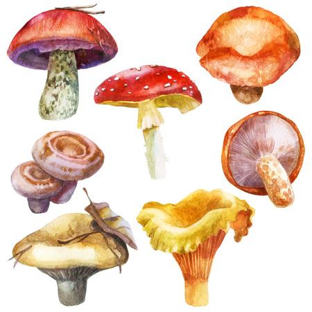 Watercolor illustration, image of mushrooms, set. Yellow milk mushrooms, orange-cap boletus, milk mushrooms, chanterelle, amanita