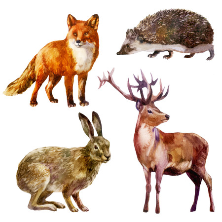 Watercolor illustration, set. Forest animal. Hare, hedgehog, fox and deer 스톡 콘텐츠