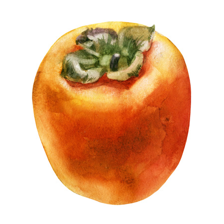 Watercolor illustration. Persimmon. The fruit of the persimmon