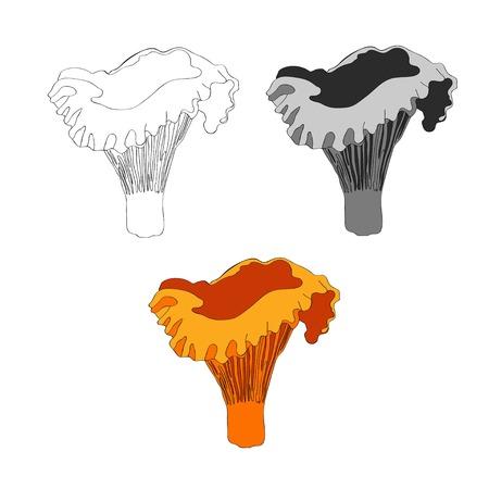 Vector illustration. Chanterelle mushroom Orange mushroom
