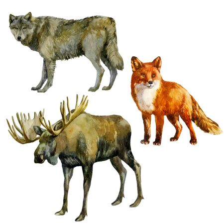 Watercolor illustration, set. Forest animals Wolf fox moose Banco de Imagens