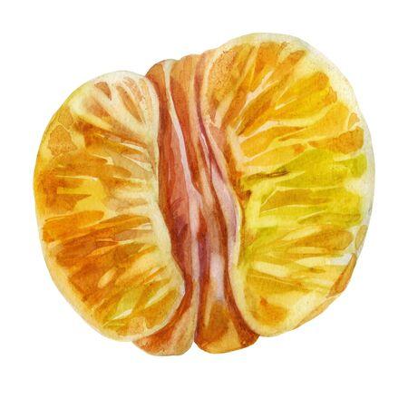 Watercolor illustration. Mandarin. Half tangerine Peeled tangerine Stok Fotoğraf
