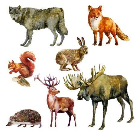 Watercolor illustration, set. Forest animals. Squirrel, wolf fox hare hedgehog deer elk