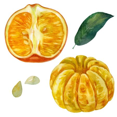 Watercolor illustration, set. Mandarin. Half a tangerine in a peel. Purified whole mandarin fruit. Mandarin leaf, tangerine seeds Stok Fotoğraf