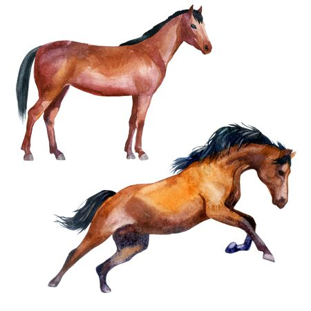 Watercolor illustration, set. Horses. Horse on the side galloping horse.