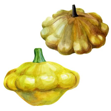 Watercolor illustration set of squash. Hand drawn watercolor painting on white background. Isolated eco food illustration on white background. Zdjęcie Seryjne