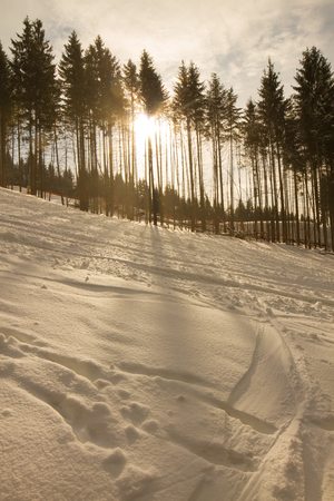 frosty morning: Suns rays pass through the green spruces. Sunset in winter forest.
