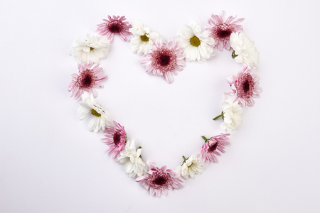 Beautiful flowers background. Gentle chrysanthemums in form of heart on white background.