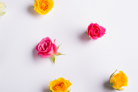 simple life: Tender flowers background. Colorful roses on a white background. Stock Photo