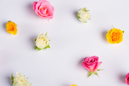 Delicate floral background. Roses on a white background.