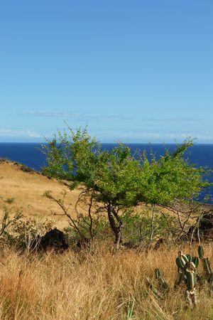 envisage: savanna on bottom indian ocean Stock Photo