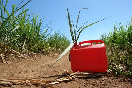 can has oil, sheet of cane has sugar which leaves the jerrycan, symbolizes new the fuel has the ethanole, photo