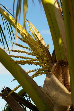 abstracted: flower of coconut