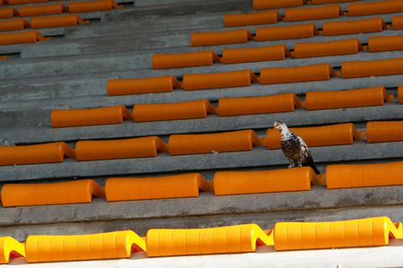 continuation: loneliness of the spectator, bird and symbol of loneliness