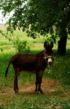 jack ass: asino solo in campagna
