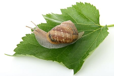 questioned: snail on green