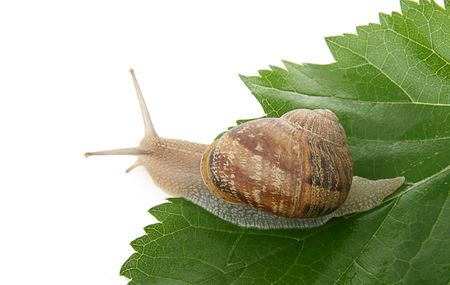 questioned: snail Stock Photo