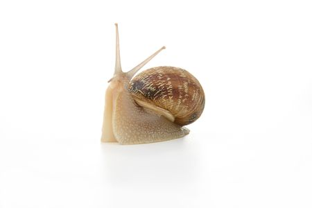 questioned: Snail interviewed
