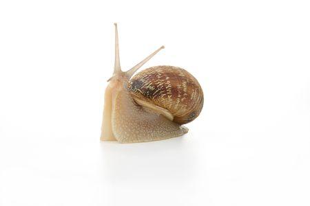 interviewed: Snail interviewed