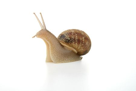 questioned: Snail questioned