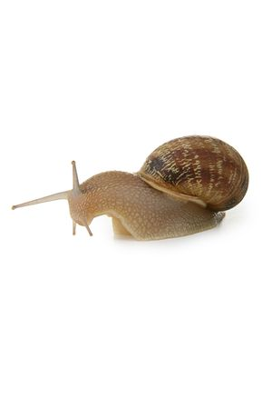 questioned: Snail disconcerted by the ground