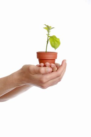 caring: plant in hand, protection of environment Stock Photo