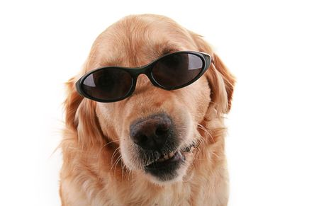 dog with sunglasses photo