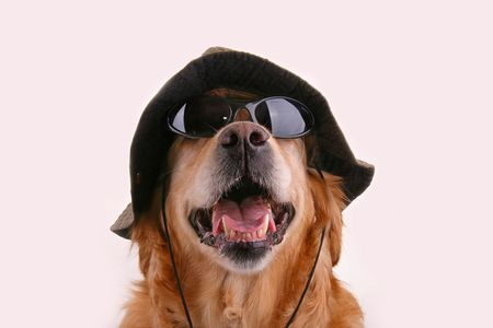 dog with hat and sunglasses photo