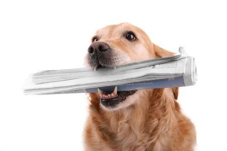 dog with newspaper photo