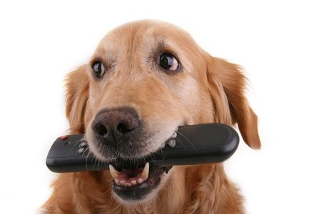 animal watching: dog with remote control Stock Photo