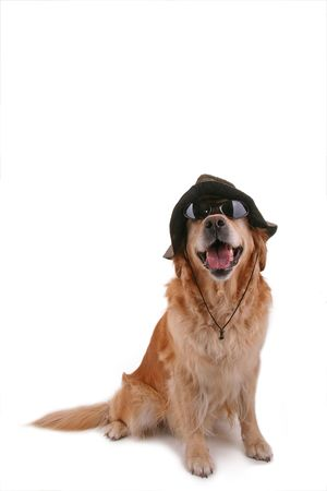 dog with sunglasses and hat photo