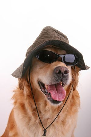 funny dog with sunglasses and hat photo